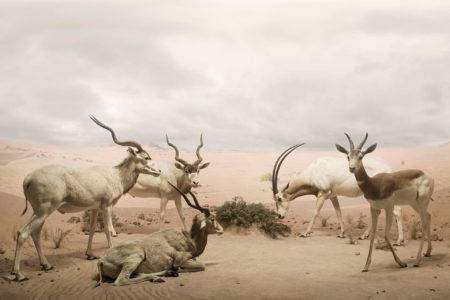 Wild by leo caillard